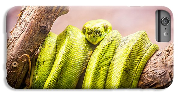Green Tree Python IPhone 6s Plus Case by Pati Photography