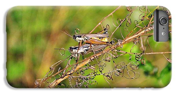 Gregarious Grasshoppers IPhone 6s Plus Case by Al Powell Photography USA
