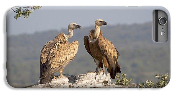 Griffon Vulture Pair Extremadura Spain IPhone 6s Plus Case by Gerard de Hoog