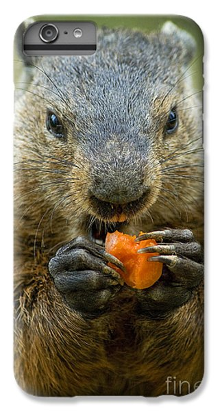 Groundhog iPhone 6s Plus Case - Groundhogs Favorite Snack by Paul W Faust -  Impressions of Light