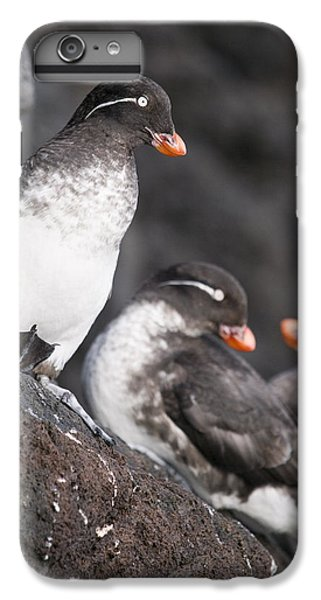 Auklets iPhone 6s Plus Case - Group Of Parakeet Auklets, St. Paul by John Gibbens