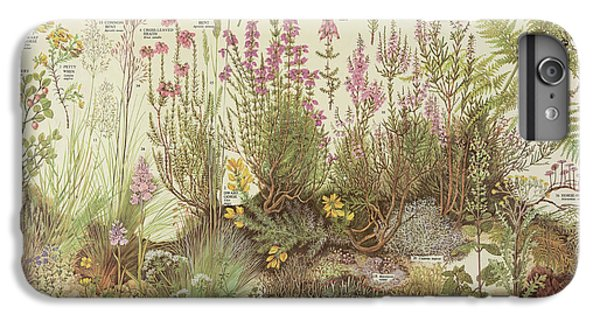 Fairy Cake iPhone 6s Plus Case - Heathland Plants by Natural History Museum, London/science Photo Library