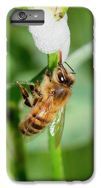 Cuckoo iPhone 6s Plus Case - Honey Bee Drinking From Cuckoo-spit by Dr. John Brackenbury