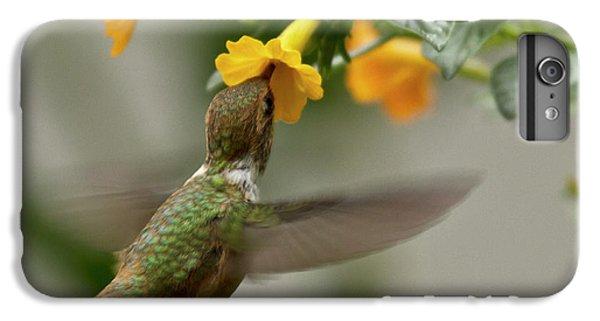 Hummingbird Sips Nectar IPhone 6s Plus Case