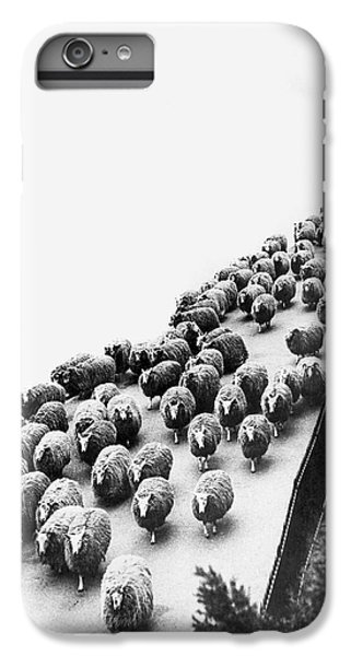Hyde Park Sheep Flock IPhone 6s Plus Case by Underwood Archives