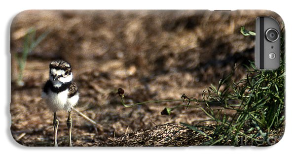 Killdeer Chick IPhone 6s Plus Case
