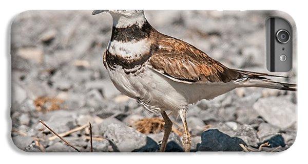 Killdeer Nesting IPhone 6s Plus Case by Lara Ellis