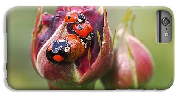 Ladybug Foursome IPhone 6s Plus Case by Rona Black