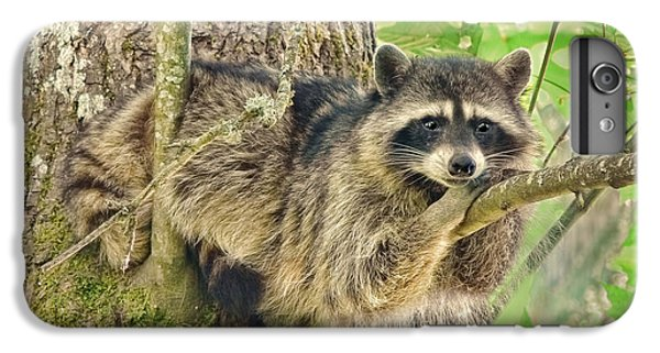 Lazy Day Raccoon IPhone 6s Plus Case by Jennie Marie Schell