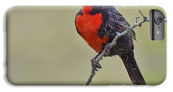 Long-tailed Meadowlark IPhone 6s Plus Case by Tony Beck