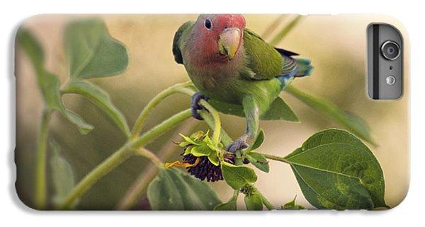 Lovebird On  Sunflower Branch  IPhone 6s Plus Case