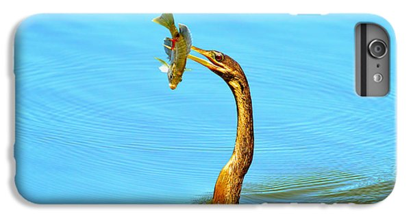 Anhinga iPhone 6s Plus Case - Lunch On The Spear by Deborah Benoit