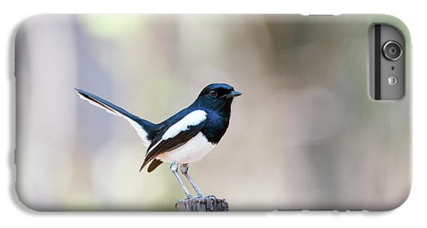 Magpies iPhone 6s Plus Case - Madagascan Magpie-robin Male by Dr P. Marazzi