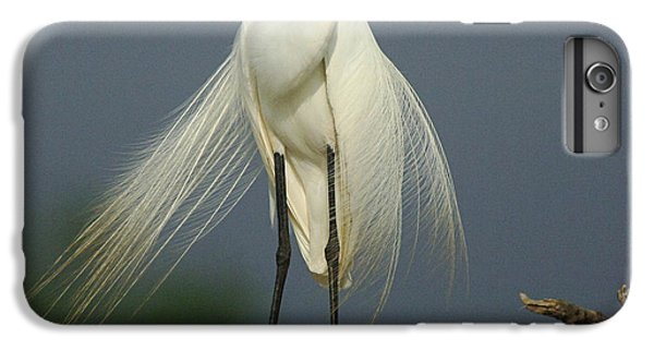 Majestic Great Egret IPhone 6s Plus Case by Bob Christopher