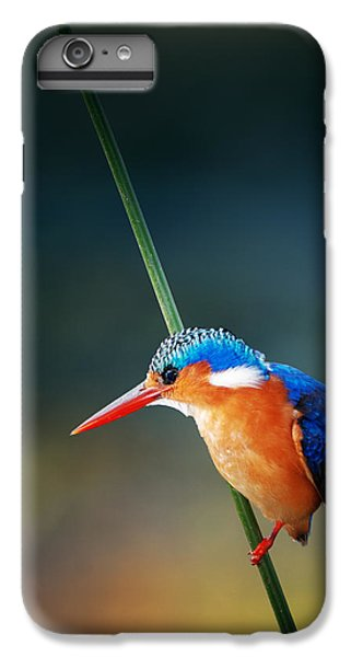 Malachite Kingfisher IPhone 6s Plus Case by Johan Swanepoel