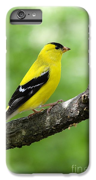 Bunting iPhone 6s Plus Case - Male American Goldfinch by Thomas R Fletcher