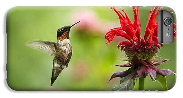 Male Ruby-throated Hummingbird Hovering Near Flowers IPhone 6s Plus Case