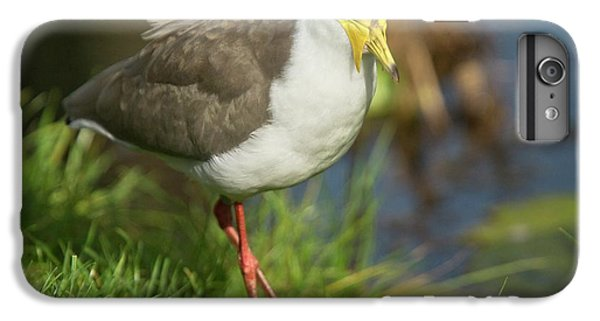 Lapwing iPhone 6s Plus Case - Masked Lapwing by Bob Gibbons