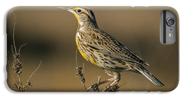 Meadowlark On Weed IPhone 6s Plus Case by Robert Frederick