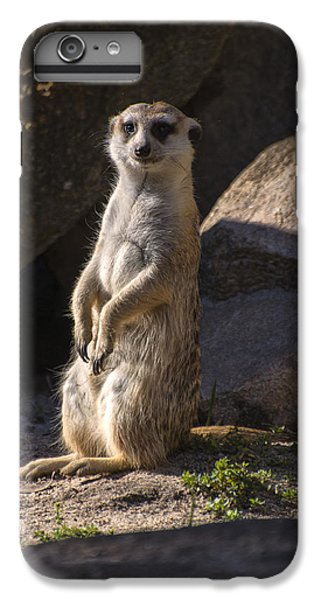 Meerkat Looking Forward IPhone 6s Plus Case by Chris Flees