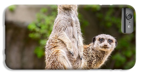 Meerkat Pair IPhone 6s Plus Case by Jamie Pham