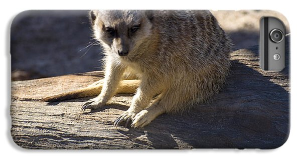 Meerkat Resting On A Rock IPhone 6s Plus Case by Chris Flees