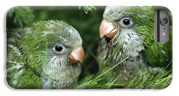 Monk Parakeet Chicks IPhone 6s Plus Case