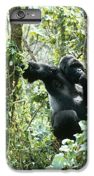 Mountain Gorilla IPhone 6s Plus Case by Tierbild Okapia