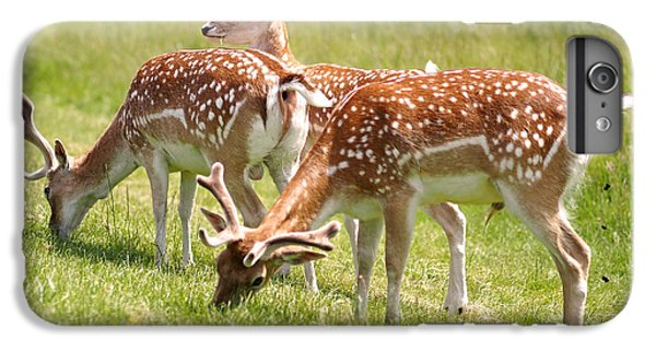 Multitasking Deer In Richmond Park IPhone 6s Plus Case by Rona Black
