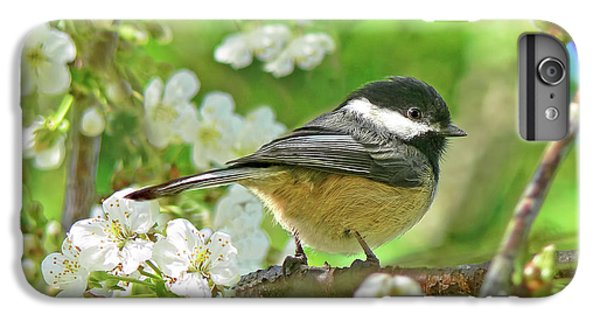 Chickadee iPhone 6s Plus Case - My Little Chickadee In The Cherry Tree by Jennie Marie Schell