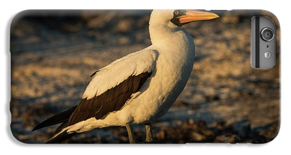 Boobies iPhone 6s Plus Case - Nazca Booby (sula Granti by Pete Oxford