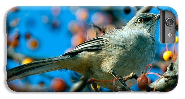 Mockingbird iPhone 6s Plus Case - Northern Mockingbird by Bob Orsillo