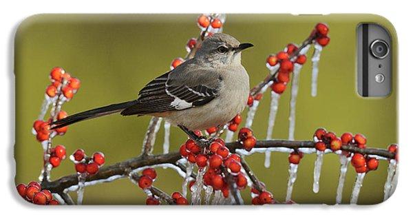 Mockingbird iPhone 6s Plus Case - Northern Mockingbird (mimus Polyglottos by Rolf Nussbaumer