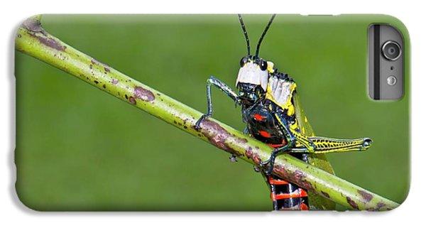 Grasshopper iPhone 6s Plus Case - Northern Spotted Grasshopper by K Jayaram