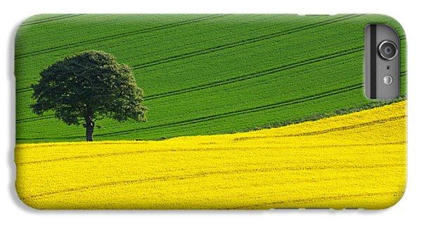 Rural Scenes iPhone 6s Plus Case - Oak Tree Split by Richard Thomas
