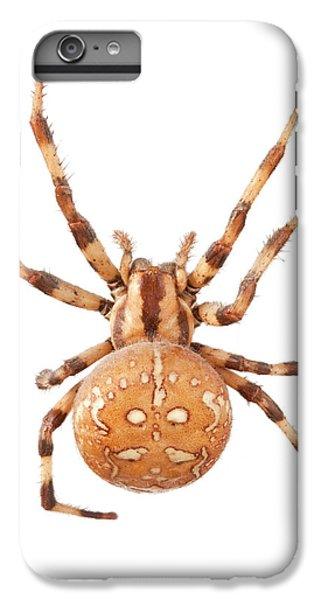 Orb Web Spider IPhone 6s Plus Case