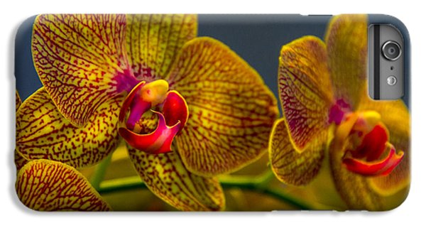 Orchid iPhone 6s Plus Case - Orchid Color by Marvin Spates