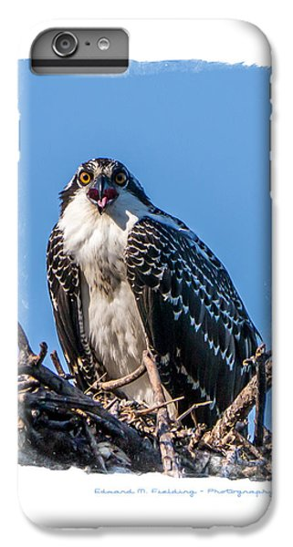Osprey iPhone 6s Plus Case - Osprey Surprise Party Card by Edward Fielding
