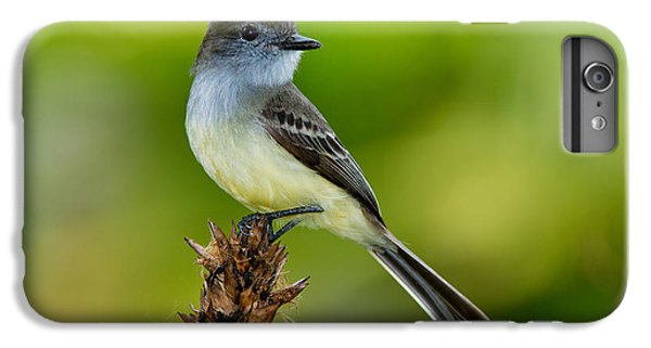Pale-edged Flycatcher IPhone 6s Plus Case by Anthony Mercieca