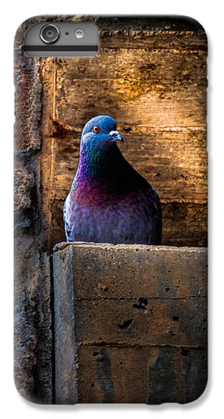 Pigeon iPhone 6s Plus Case - Pigeon Of The City by Bob Orsillo