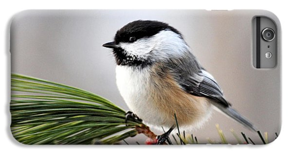 Pine Chickadee IPhone 6s Plus Case