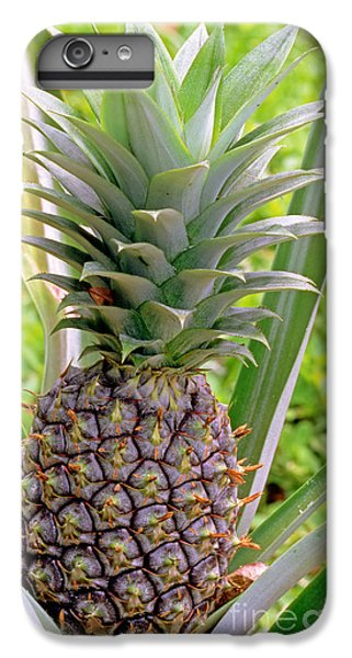 Pineapple Plant IPhone 6s Plus Case by Millard H. Sharp