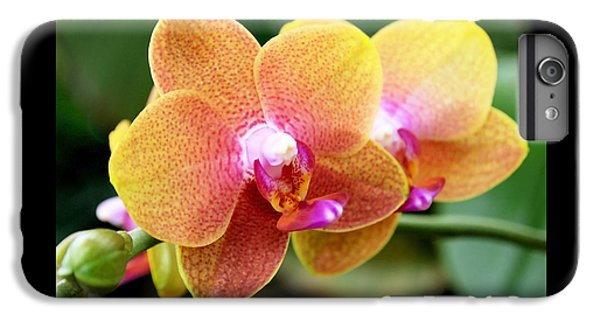 Pink Yellow Orchid IPhone 6s Plus Case by Rona Black