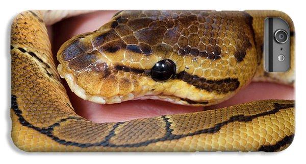 Pinstripe Royal Python IPhone 6s Plus Case