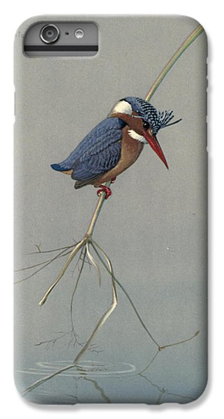 Kingfisher iPhone 6s Plus Case - Pygmy Kingfisher by Dreyer Wildlife Print Collections