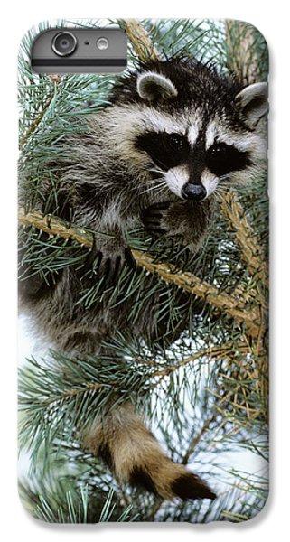 Raccoon IPhone 6s Plus Case