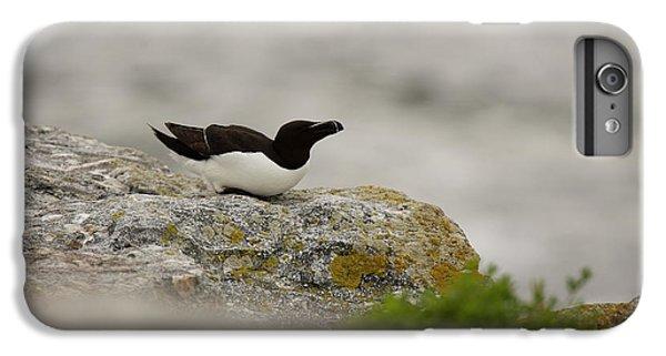 Razorbill iPhone 6s Plus Case - Razorbill Alca Torda, A Big Diving Bird by Jose Azel
