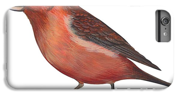 Red Crossbill IPhone 6s Plus Case by Anonymous