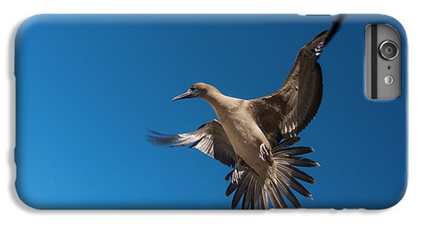 Red-footed Booby (sula Sula Websteri IPhone 6s Plus Case by Pete Oxford