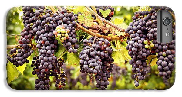 Red Grapes In Vineyard IPhone 6s Plus Case